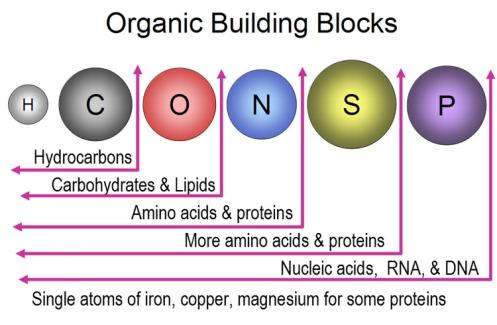 organicbuildingblocks