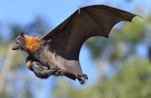 morcegos.