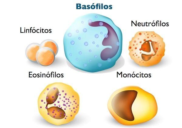 tipos-de-leucocitos-1-640-427